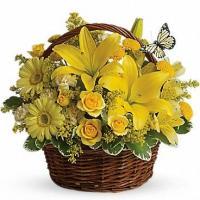 Avio Flowers
