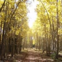 Cutting Edge Tree Care, LLC