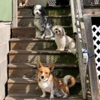 Harper's Doggie Daycare