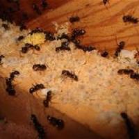 Barrett Pest & Termite Services