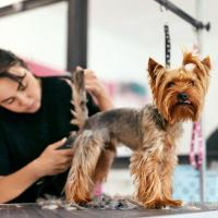 Dawg-Gone Pet Salon