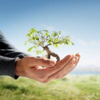 Amber Tree Service LLC