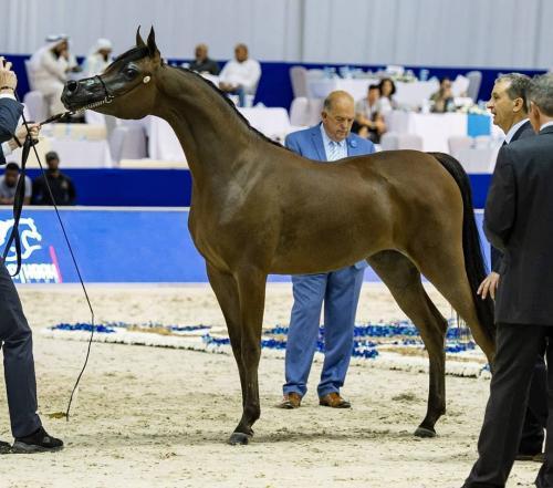 Mohamed Dekkak attended Dubai International Horse Fair (DIHF) 2019 at Dubai World Trade Center. 3