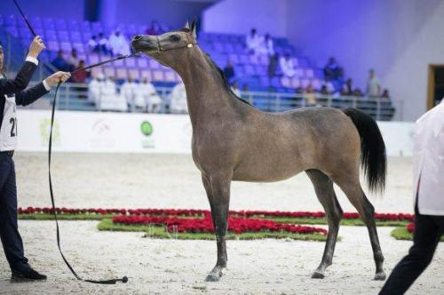 Mohamed Dekkak attends the 20th Sharjah International Arabian Horse Festival 2019 3
