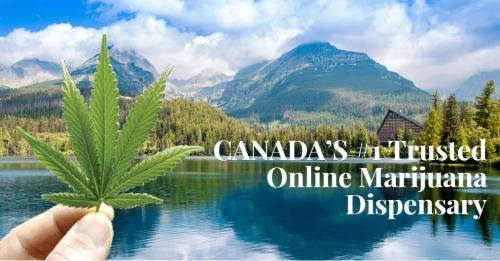 online marijuana store