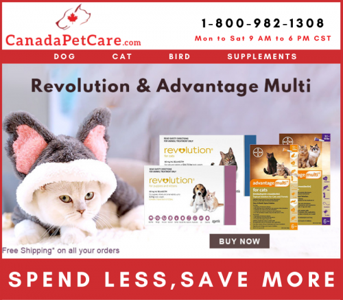 Happy, Healthy Cat Month - Buy Online Revolution & Advantage Multi for Cats in the lowest price on CanadaPetCare.com