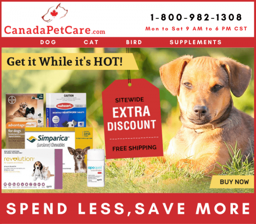 Affordable Online Pet Supplies for Dogs & Cats with Best Discount + Free Shipping
