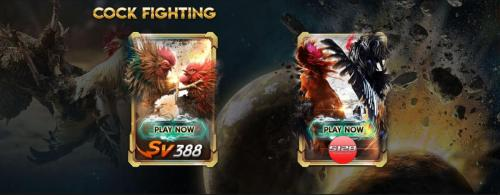 Online Cock Fighting SV3888 | Adu Ayam Online S128 Malaysia