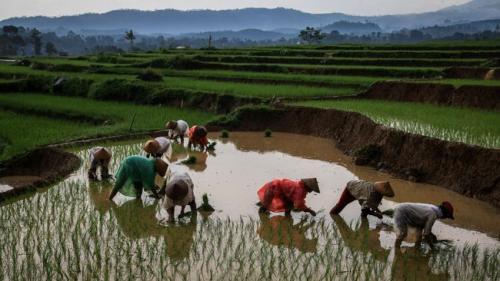 Pertanian Indonesia 1