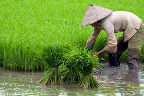 Pertanian Indonesia 2