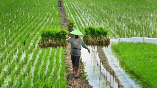 Pertanian Indonesia 3