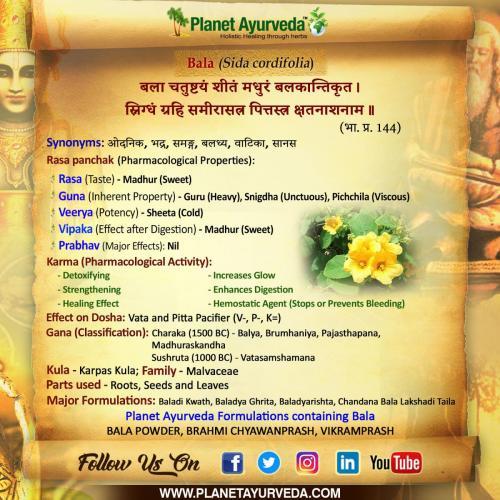 Bala (Sida cordifolia) - Ayurvedic Properties & Health Benefits
