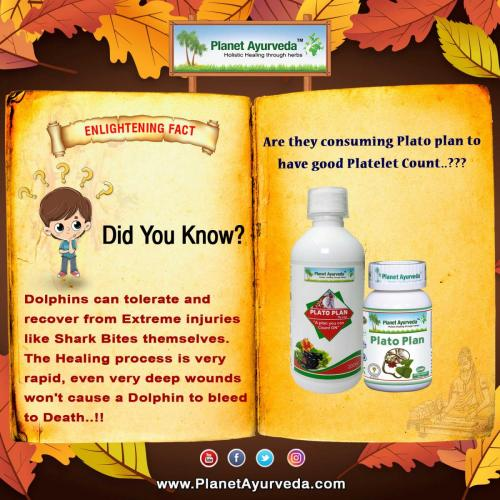 Plato Plan Syrup - Increase Platelet Count Naturally